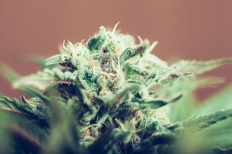 Medicinal Cannabis Products in Australia