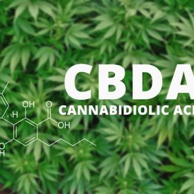 what is cbda cannabidiolic acid