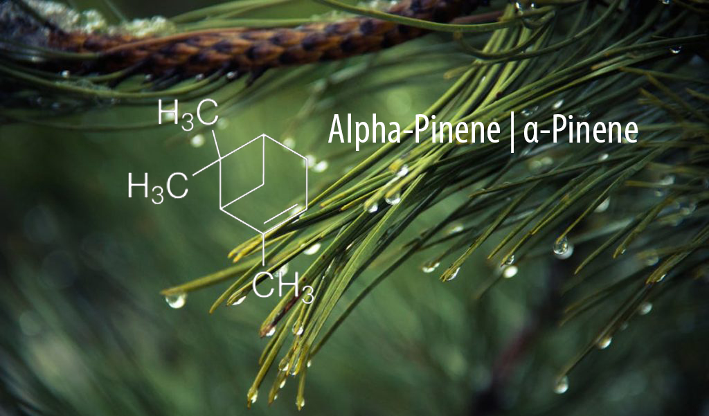 Alpha-Pinene-Chemical-stucture