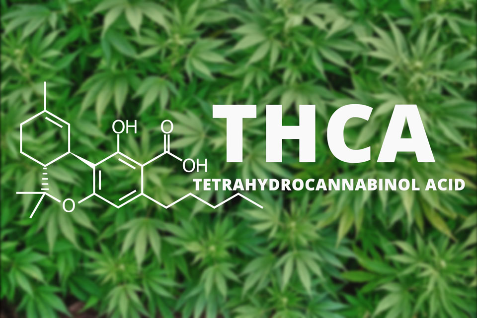 What is THCA Tetrahydrocannabinol Acid