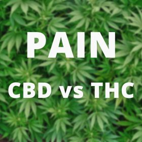 CBD Oil For Pain vs THC Oil