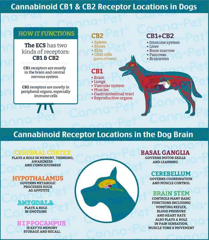 Endocannabinoid System in Dogs