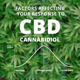 How CBD works: factors affecting your response to CBD cannabidiol